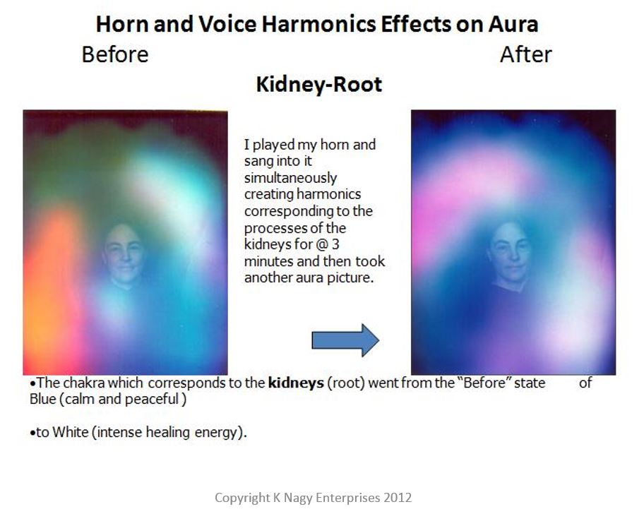 Kidney Support Harmonics